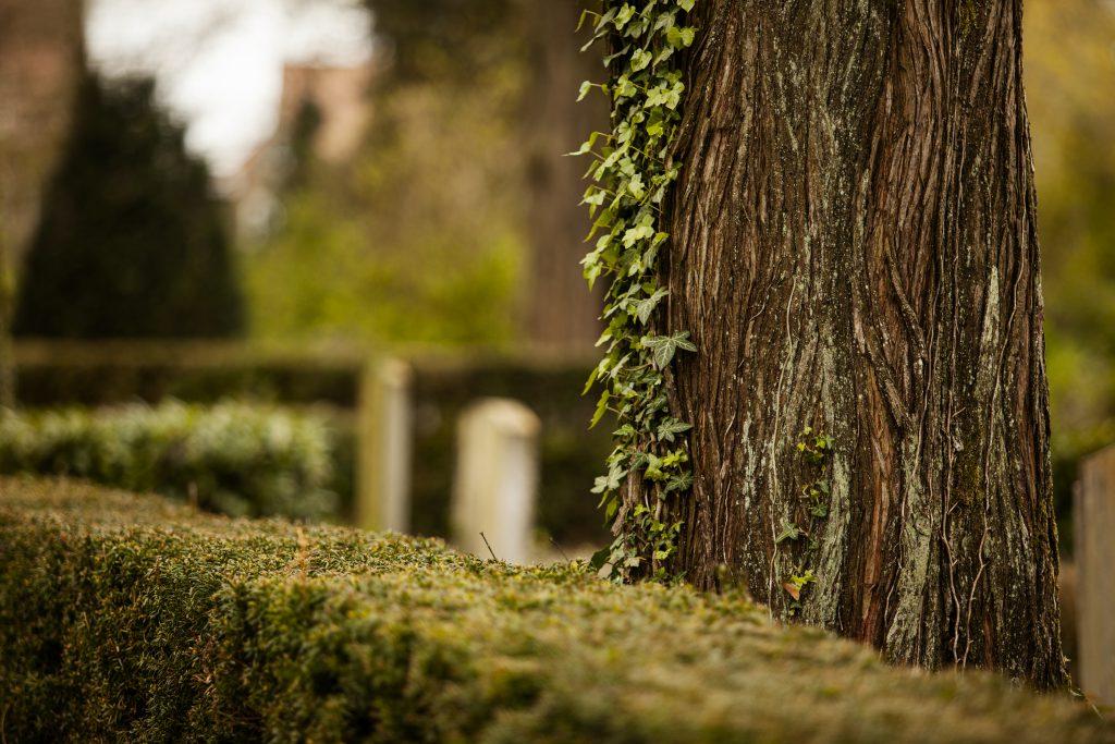 ervaringen-begrafenis-regelen-Welkom-Begrafenisverzorging-Begrafenisondernemer-Poppe-Minnaard-Walcheren-Begraven-Zeeland-Vlissingen-Middelburg
